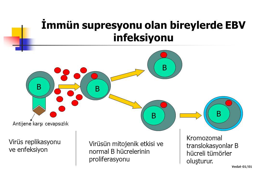 İmmün supresyonu olan bireylerde EBV infeksiyonu