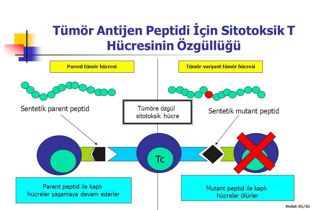 Tümör Antijen Peptidi İçin Sitotoksik T Hücresinin Özgüllüğü