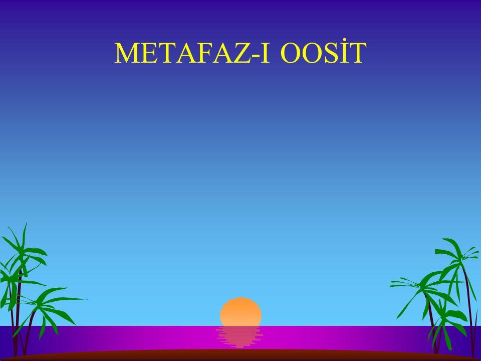 METAFAZ-I OOSİT