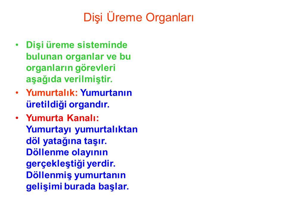 Dişi Üreme Organları Dişi üreme sisteminde bulunan organlar ve bu organların görevleri aşağıda verilmiştir.
