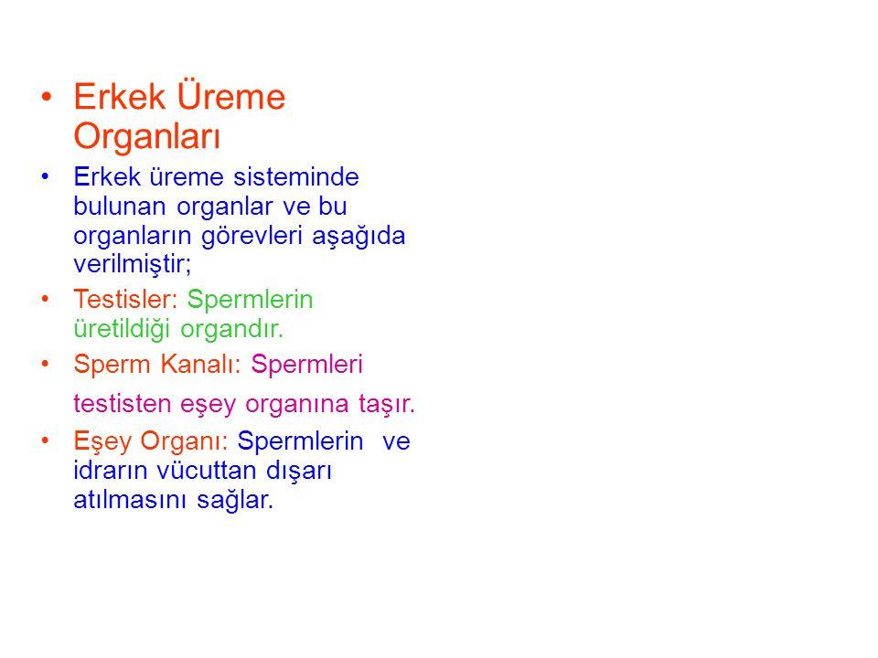 Erkek Üreme Organları Erkek üreme sisteminde bulunan organlar ve bu organların görevleri aşağıda verilmiştir;