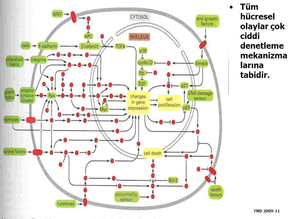 Tüm hücresel olaylar çok ciddi denetleme mekanizmalarına tabidir.