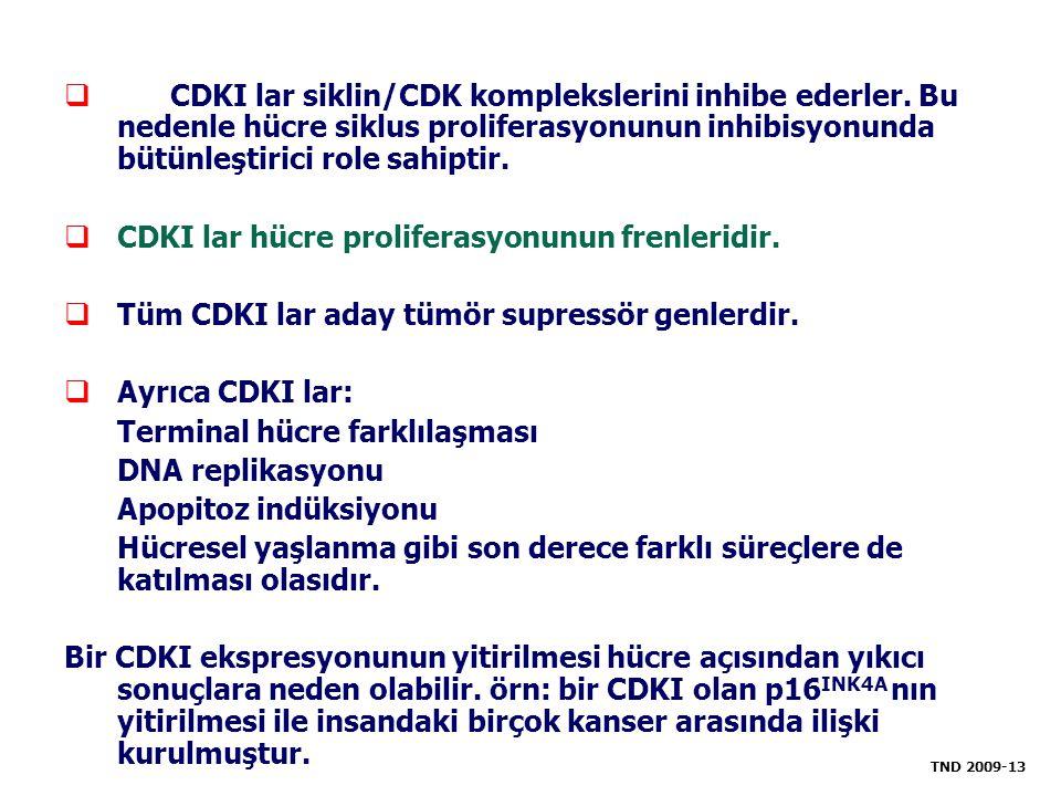 CDKI lar hücre proliferasyonunun frenleridir.