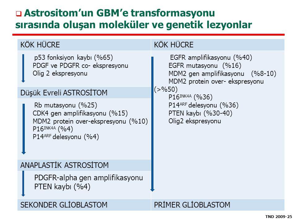 EGFR amplifikasyonu (%40)
