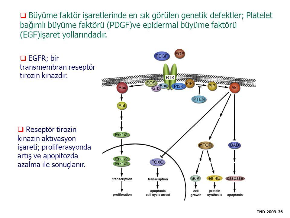 EGFR; bir transmembran reseptör tirozin kinazdır.