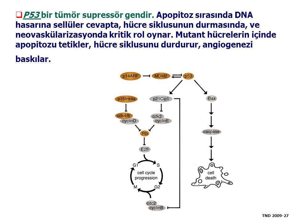 P53 bir tümör supressör gendir