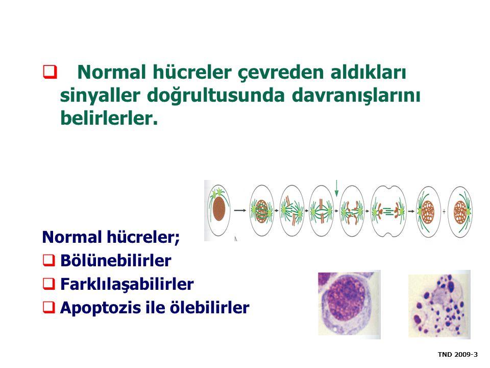 Normal hücreler çevreden aldıkları sinyaller doğrultusunda davranışlarını belirlerler.