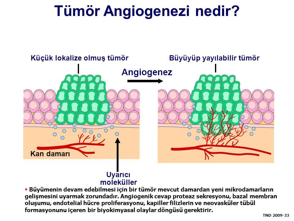 Tümör Angiogenezi nedir