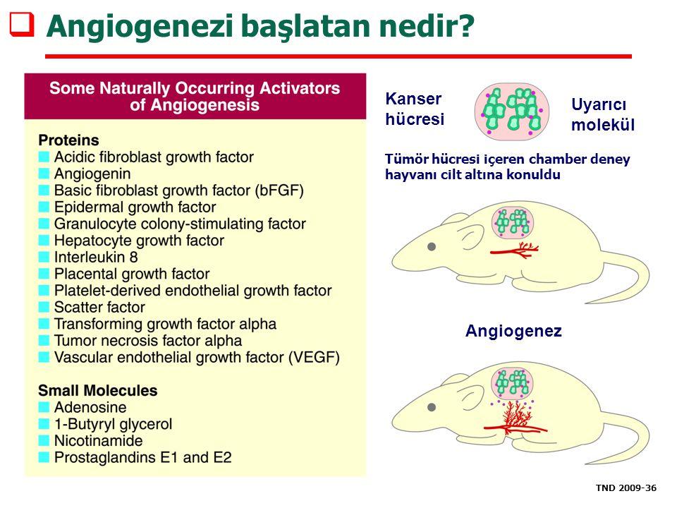 Angiogenezi başlatan nedir