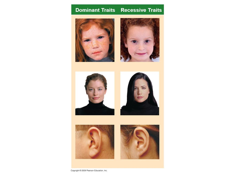Dominant Traits Recessive Traits