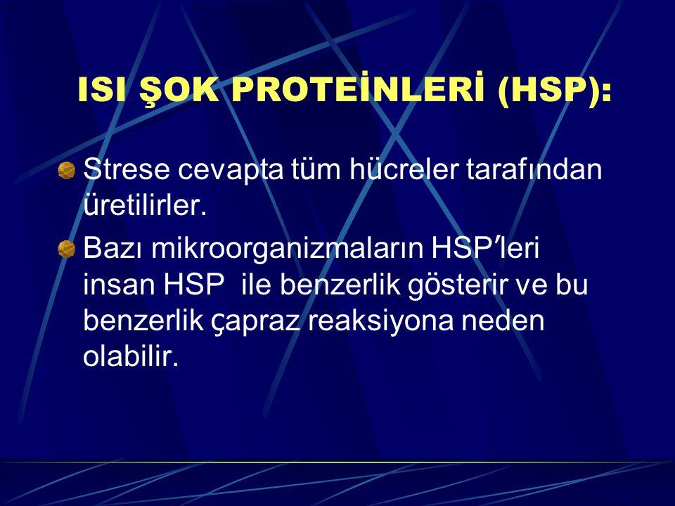 ISI ŞOK PROTEİNLERİ (HSP):