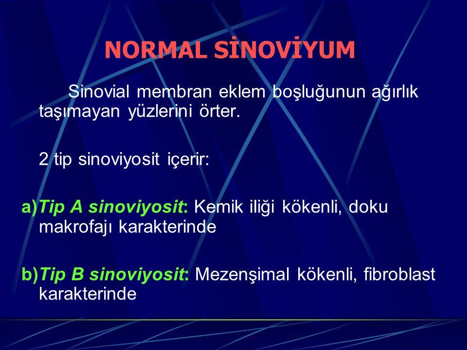 NORMAL SİNOVİYUM Sinovial membran eklem boşluğunun ağırlık taşımayan yüzlerini örter. 2 tip sinoviyosit içerir: