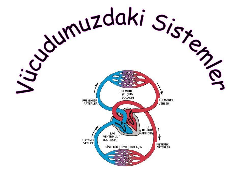 Vücudumuzdaki Sistemler