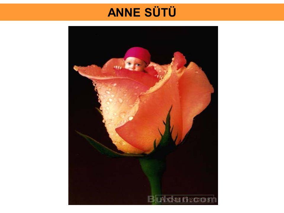 ANNE SÜTÜ