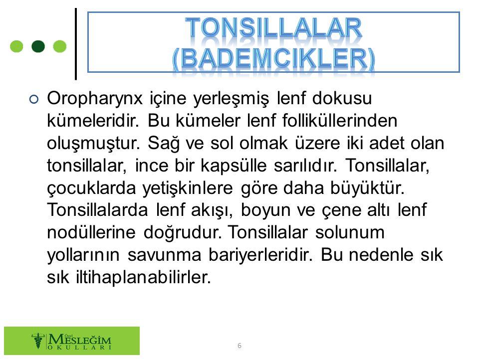 Tonsillalar (Bademcikler)