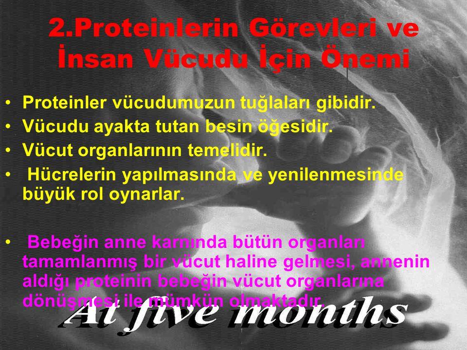 2.Proteinlerin Görevleri ve İnsan Vücudu İçin Önemi