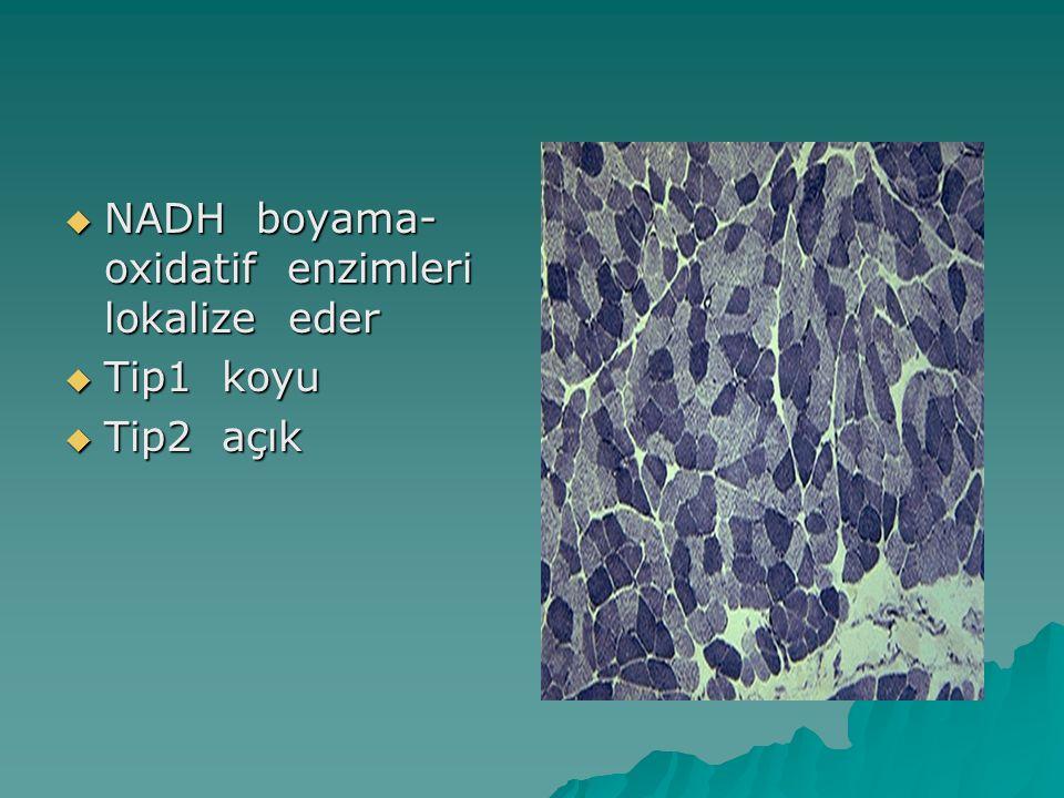NADH boyama-oxidatif enzimleri lokalize eder