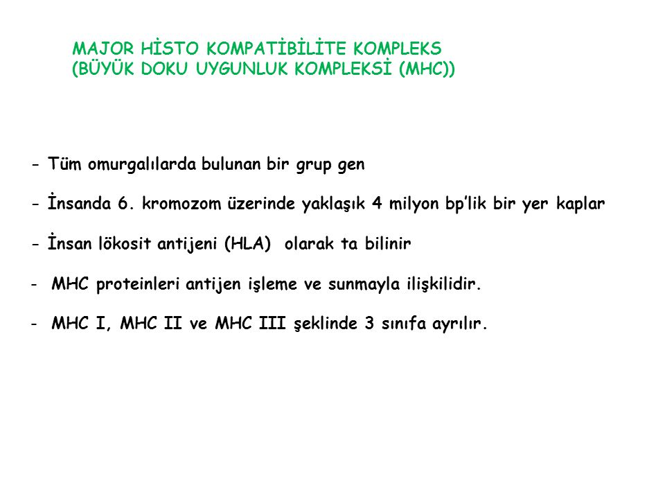MAJOR HİSTO KOMPATİBİLİTE KOMPLEKS