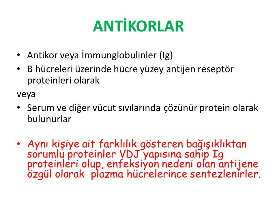 ANTİKORLAR Antikor veya İmmunglobulinler (Ig)