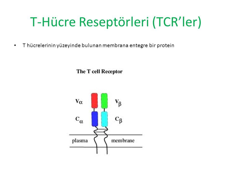 T-Hücre Reseptörleri (TCR'ler)