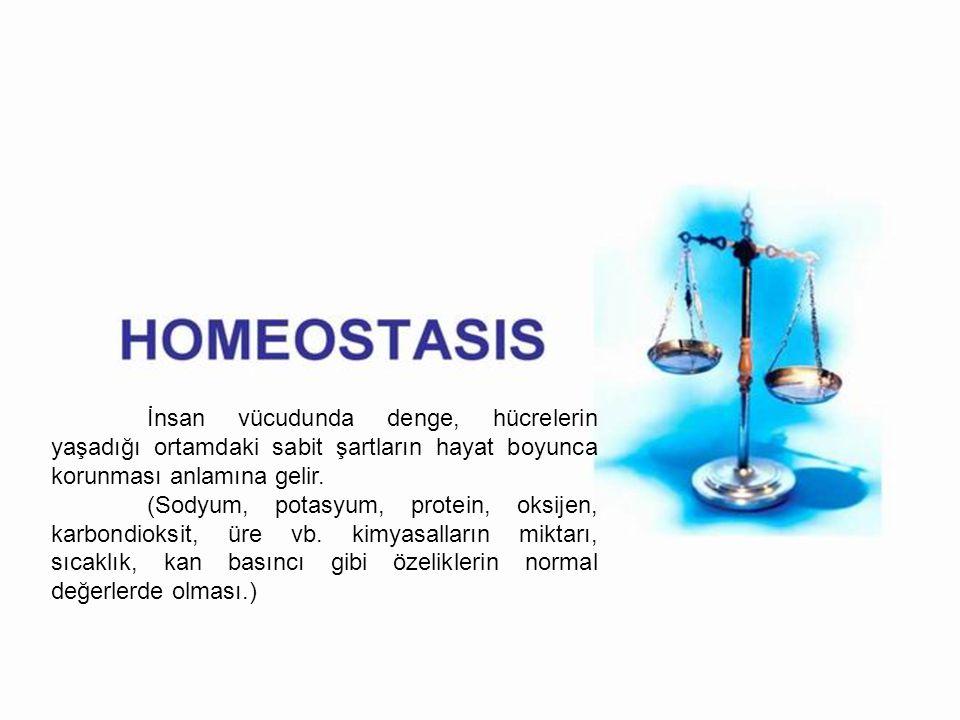 İnsan vücudunda denge, hücrelerin yaşadığı ortamdaki sabit şartların hayat boyunca korunması anlamına gelir.