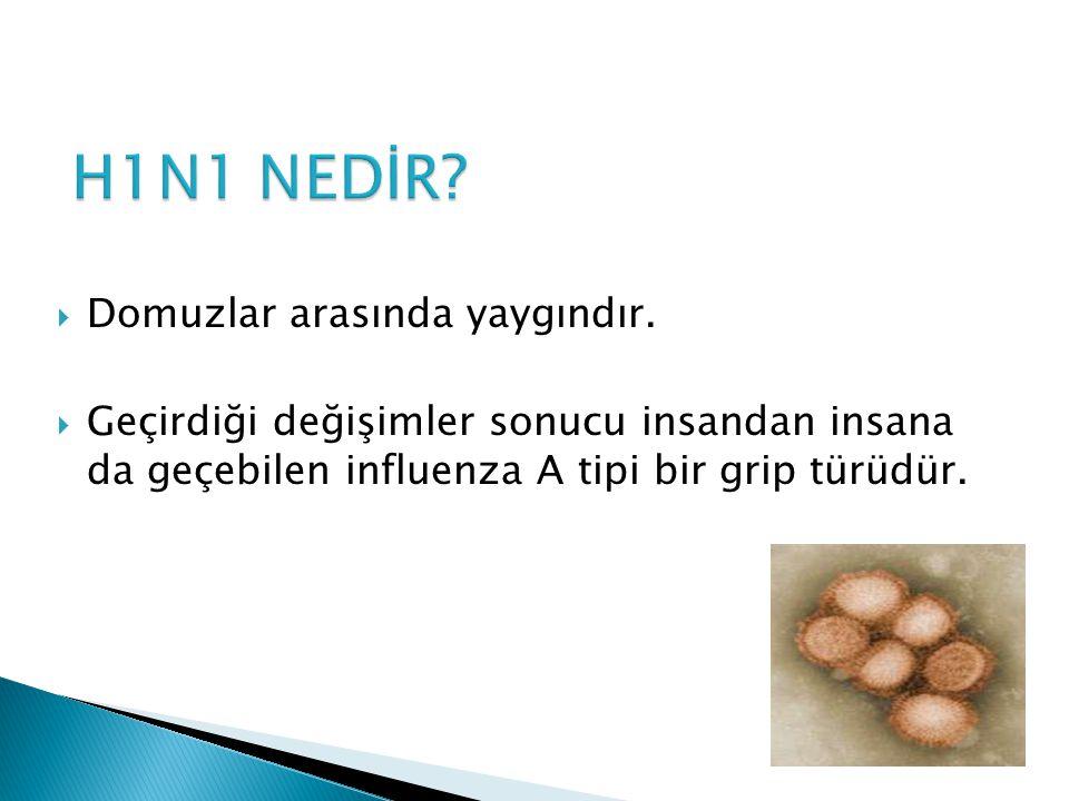 H1N1 NEDİR Domuzlar arasında yaygındır.