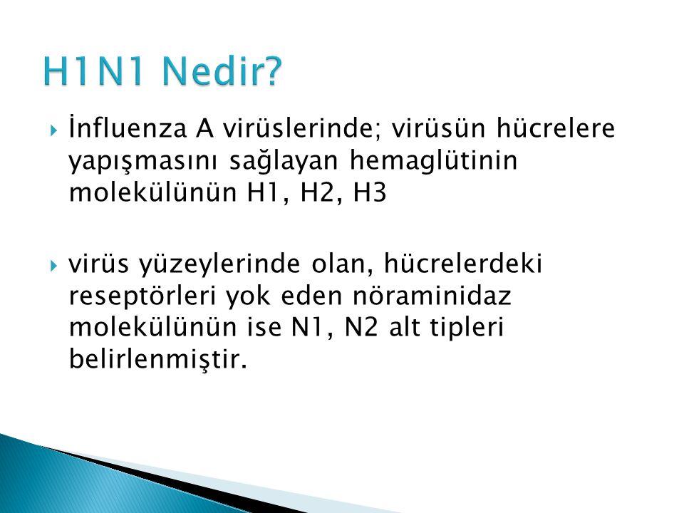 H1N1 Nedir İnfluenza A virüslerinde; virüsün hücrelere yapışmasını sağlayan hemaglütinin molekülünün H1, H2, H3.