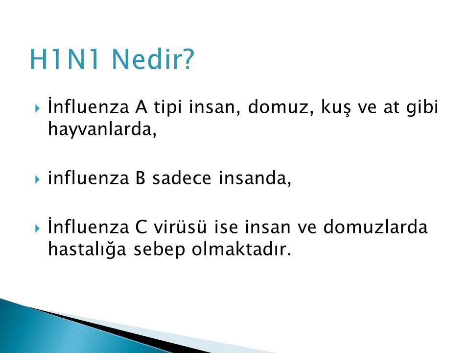 H1N1 Nedir İnfluenza A tipi insan, domuz, kuş ve at gibi hayvanlarda,