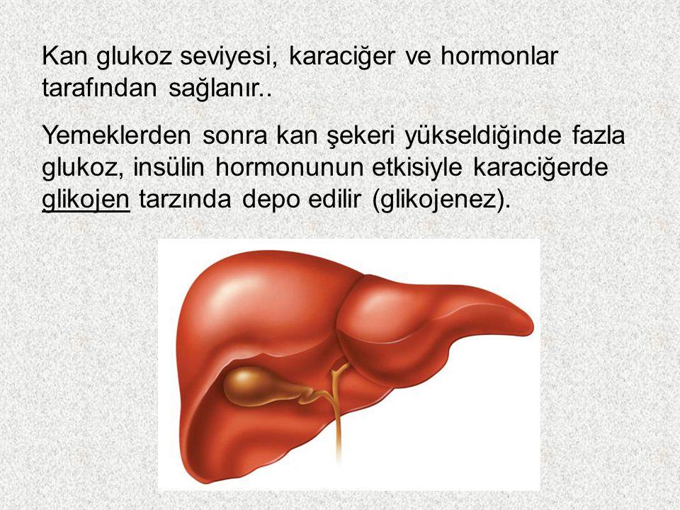 Kan glukoz seviyesi, karaciğer ve hormonlar tarafından sağlanır..