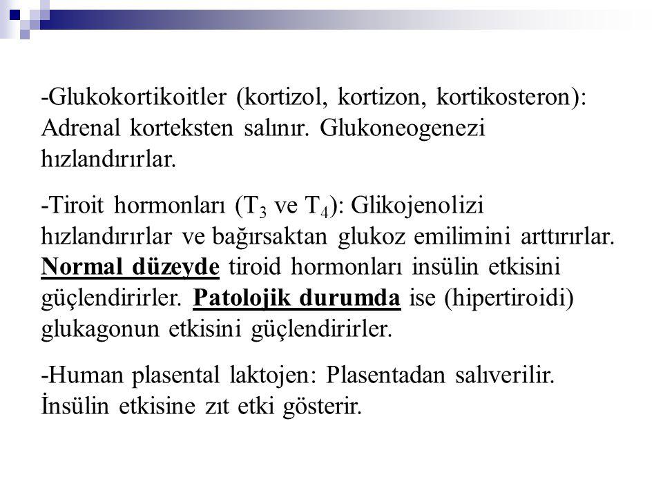 -Glukokortikoitler (kortizol, kortizon, kortikosteron): Adrenal korteksten salınır. Glukoneogenezi hızlandırırlar.