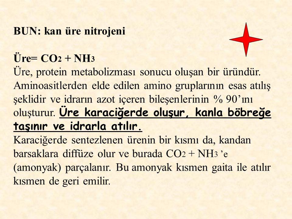 BUN: kan üre nitrojeni Üre= CO2 + NH3. Üre, protein metabolizması sonucu oluşan bir üründür.