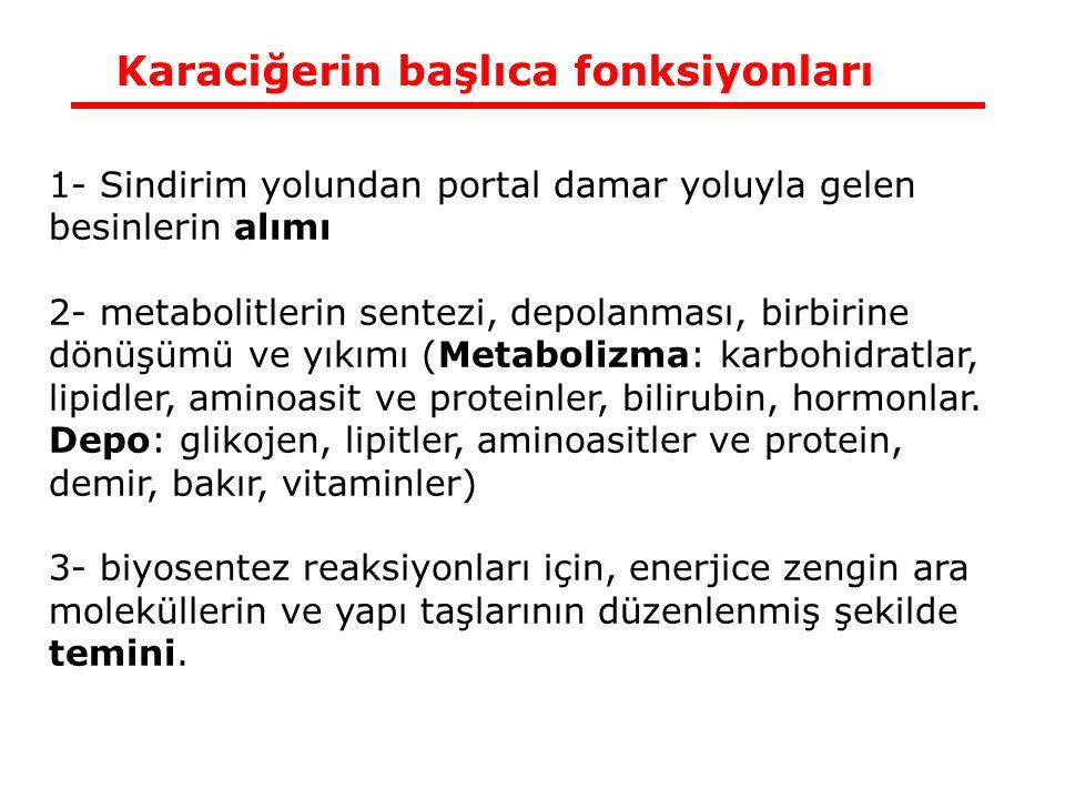 Karaciğerin başlıca fonksiyonları