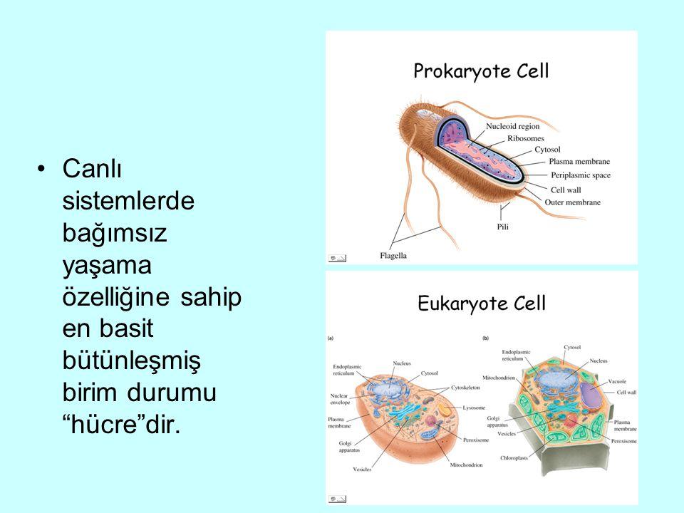 Canlı sistemlerde bağımsız yaşama özelliğine sahip en basit bütünleşmiş birim durumu hücre dir.