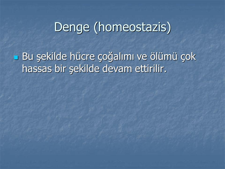 Denge (homeostazis) Bu şekilde hücre çoğalımı ve ölümü çok hassas bir şekilde devam ettirilir.
