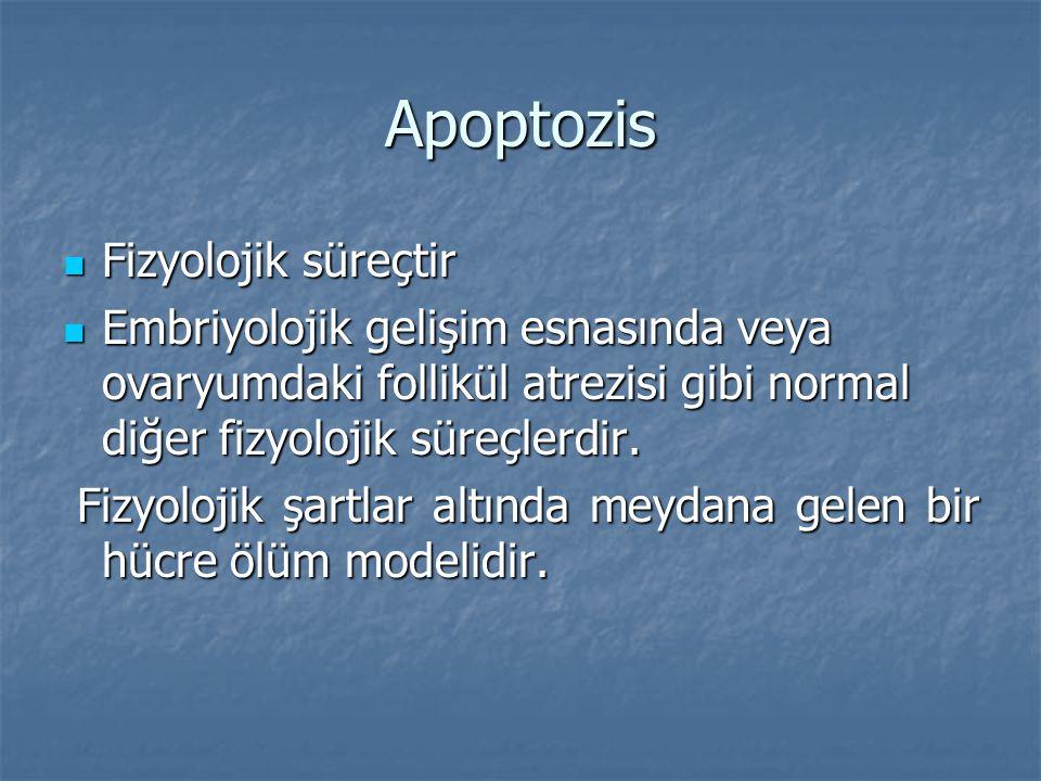 Apoptozis Fizyolojik süreçtir