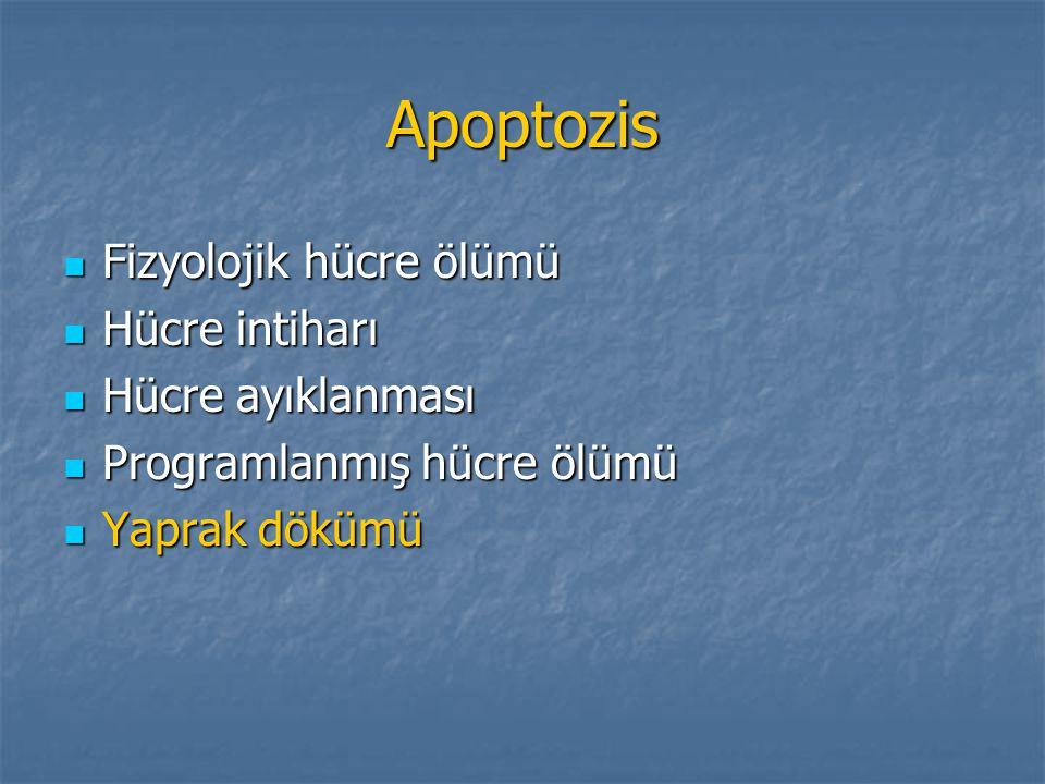 Apoptozis Fizyolojik hücre ölümü Hücre intiharı Hücre ayıklanması