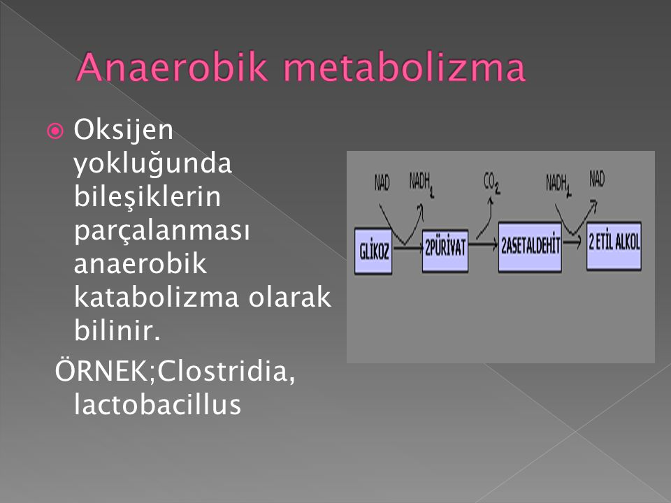 Anaerobik metabolizma
