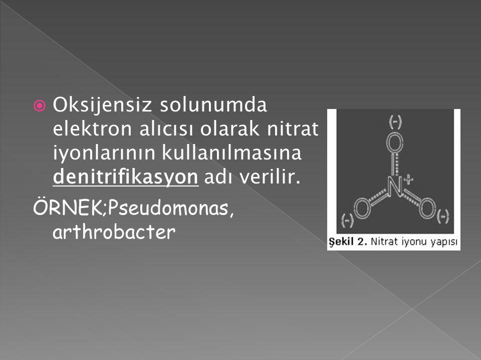 Oksijensiz solunumda elektron alıcısı olarak nitrat iyonlarının kullanılmasına denitrifikasyon adı verilir.