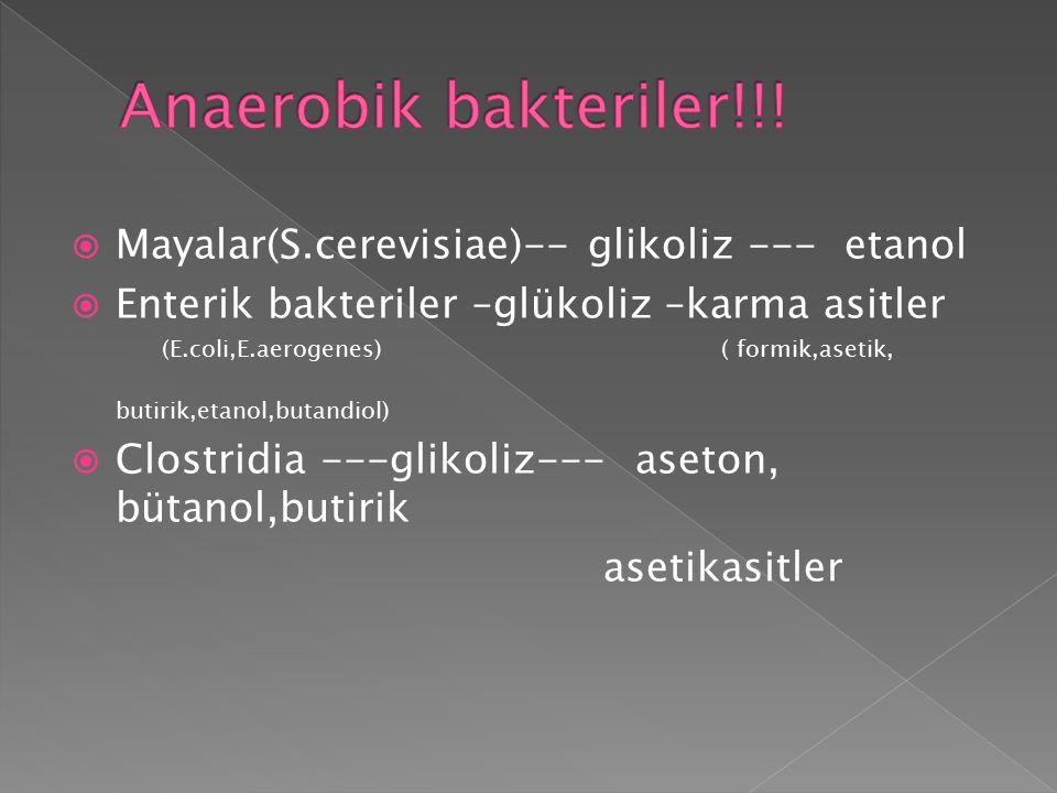 Anaerobik bakteriler!!! Mayalar(S.cerevisiae)-- glikoliz --- etanol