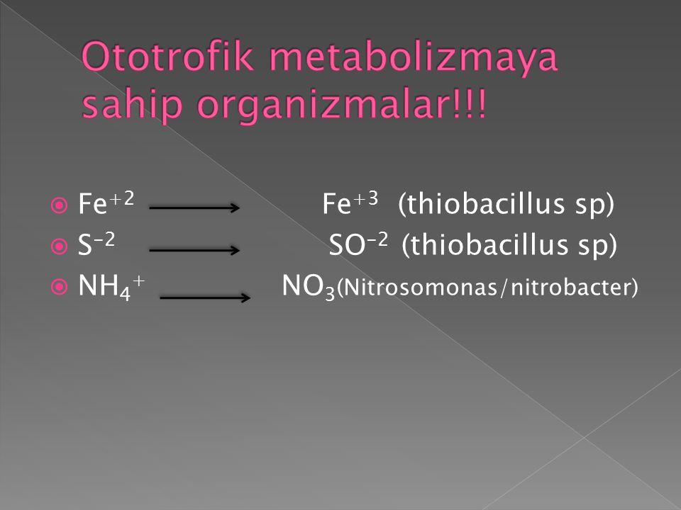Ototrofik metabolizmaya sahip organizmalar!!!
