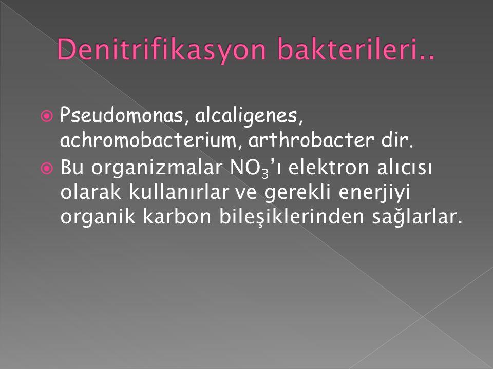 Denitrifikasyon bakterileri..