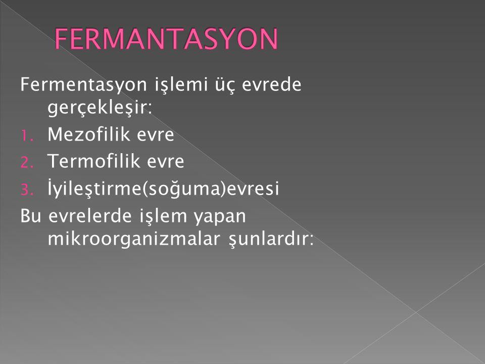 FERMANTASYON Fermentasyon işlemi üç evrede gerçekleşir: Mezofilik evre