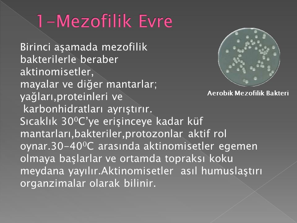 1-Mezofilik Evre Birinci aşamada mezofilik bakterilerle beraber