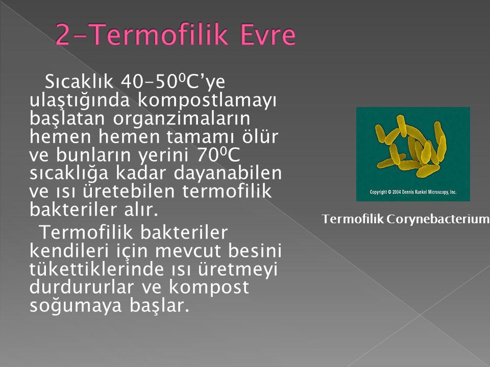 2-Termofilik Evre