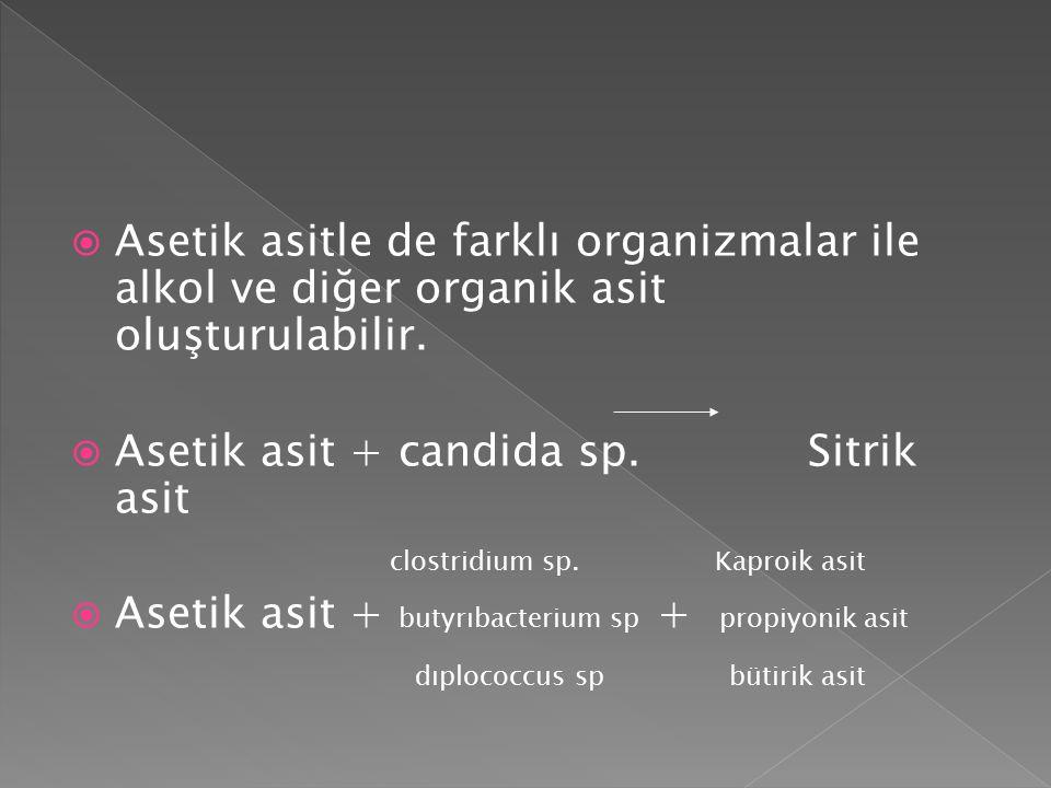 Asetik asit + candida sp. Sitrik asit clostridium sp. Kaproik asit