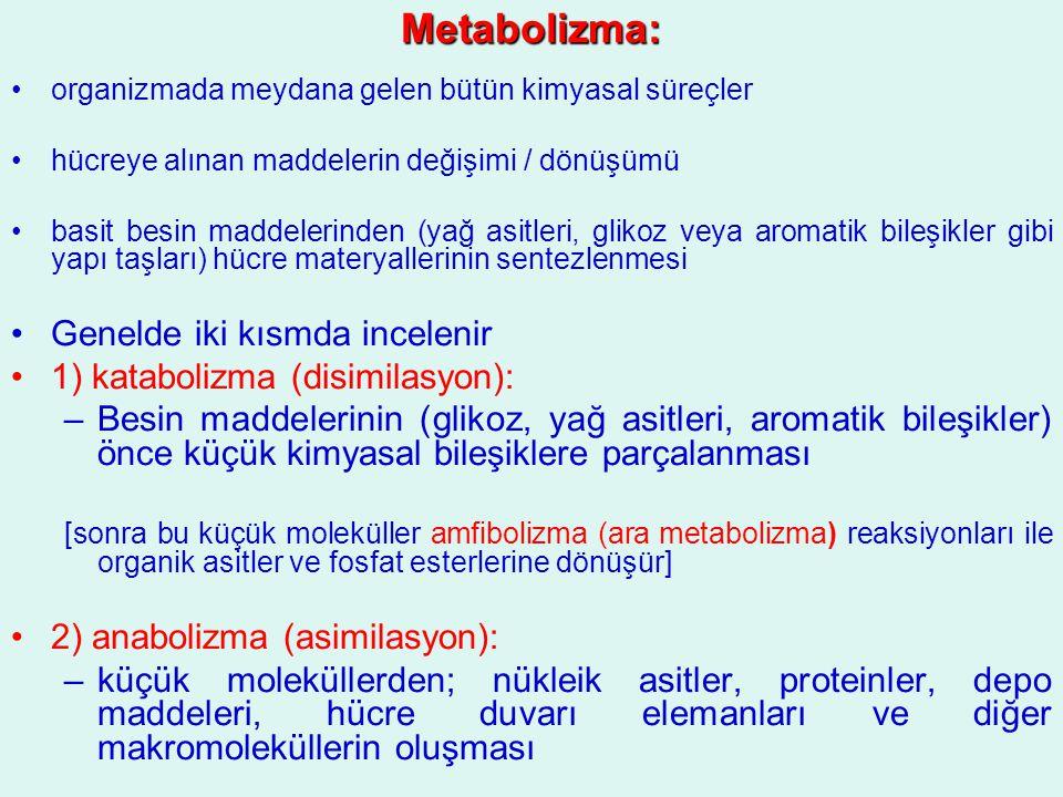 Metabolizma: Genelde iki kısmda incelenir