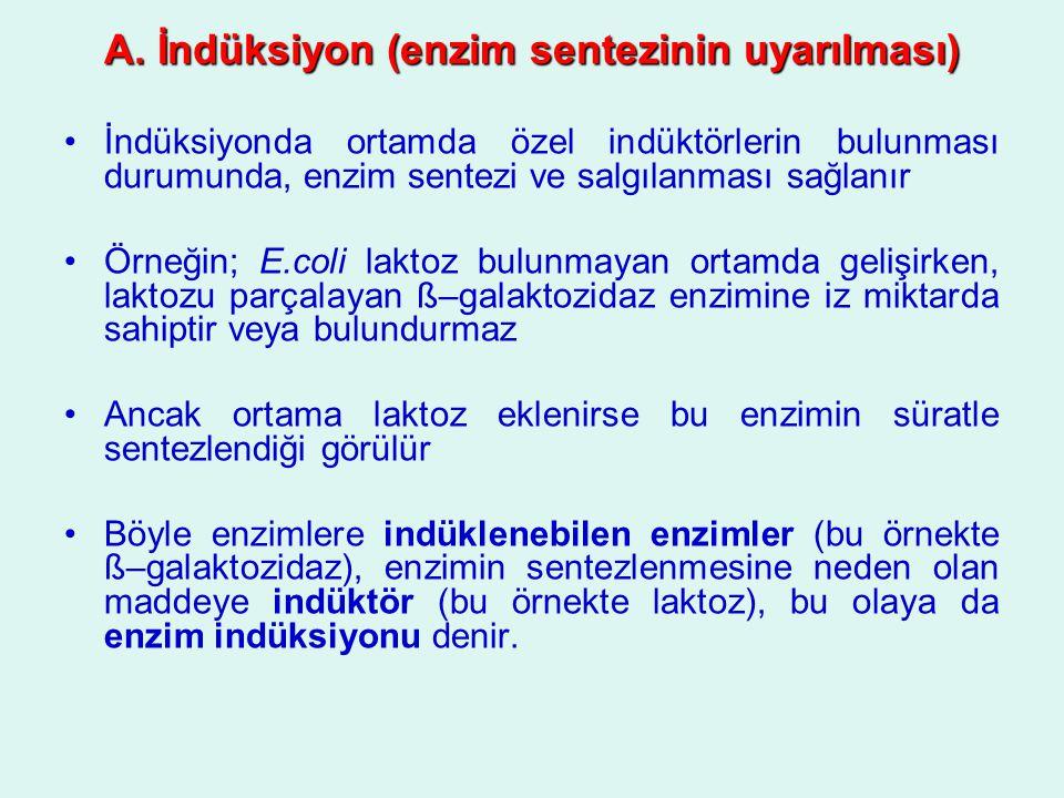 A. İndüksiyon (enzim sentezinin uyarılması)