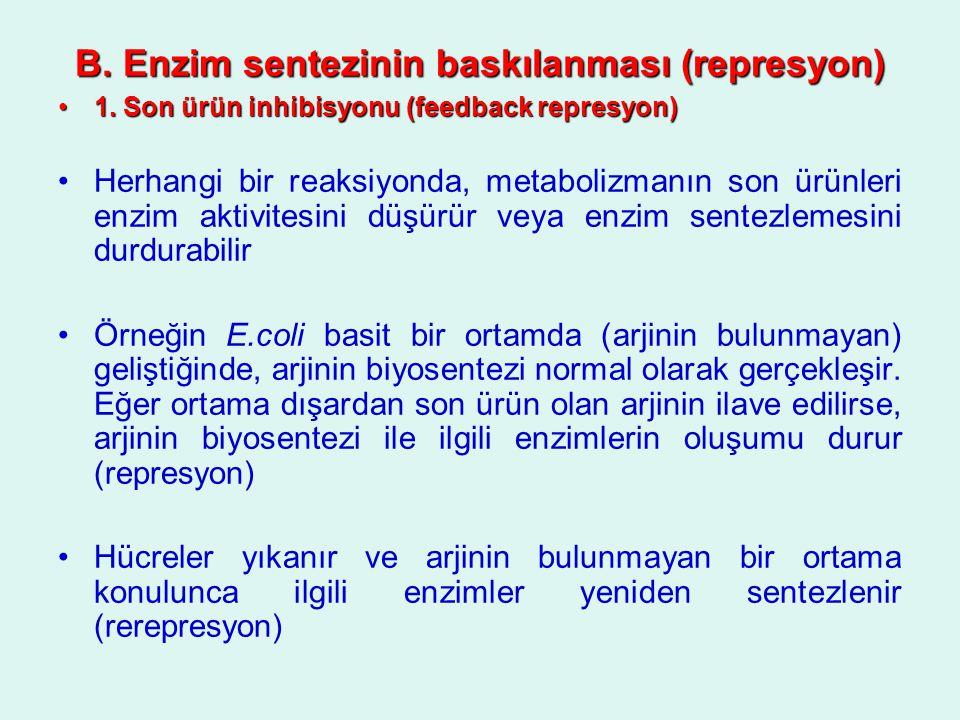 B. Enzim sentezinin baskılanması (represyon)
