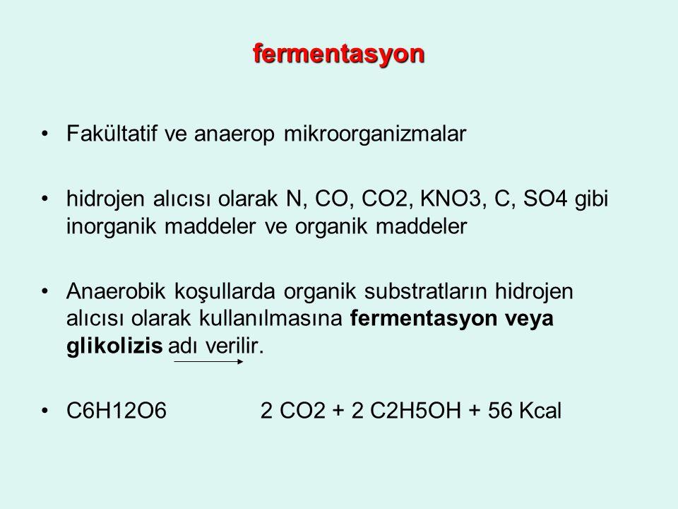 fermentasyon Fakültatif ve anaerop mikroorganizmalar