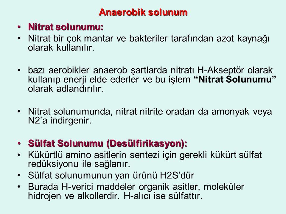 Anaerobik solunum Nitrat solunumu: Nitrat bir çok mantar ve bakteriler tarafından azot kaynağı olarak kullanılır.